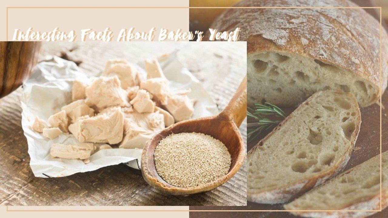 烘焙酵母知识科普!干酵母、鲜酵母、耐高糖酵母有什么区别?酵母的分类、保存与使用小tips!