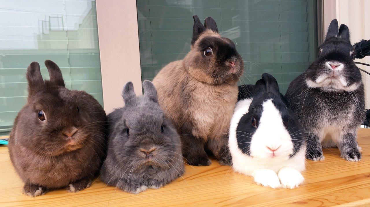 兔兔辣么可爱,你是不是要了解下?