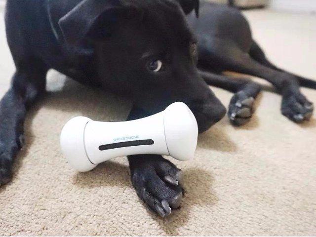 宠物玩好,你玩也好的黑科技骨头~ ...