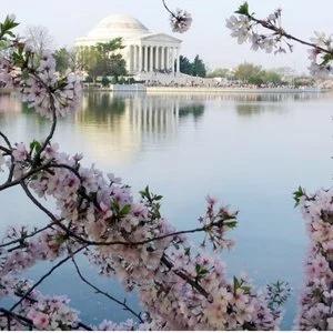直飞往返仅$76起美国多地--华盛顿DC 樱花节期间机票好价
