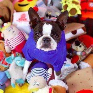 毛孩子玩具大搜罗美好生活研究所-宠物知多少