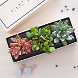 20% off Petite Garden collection15% off Original and Deluxe collections @ Lula's Garden