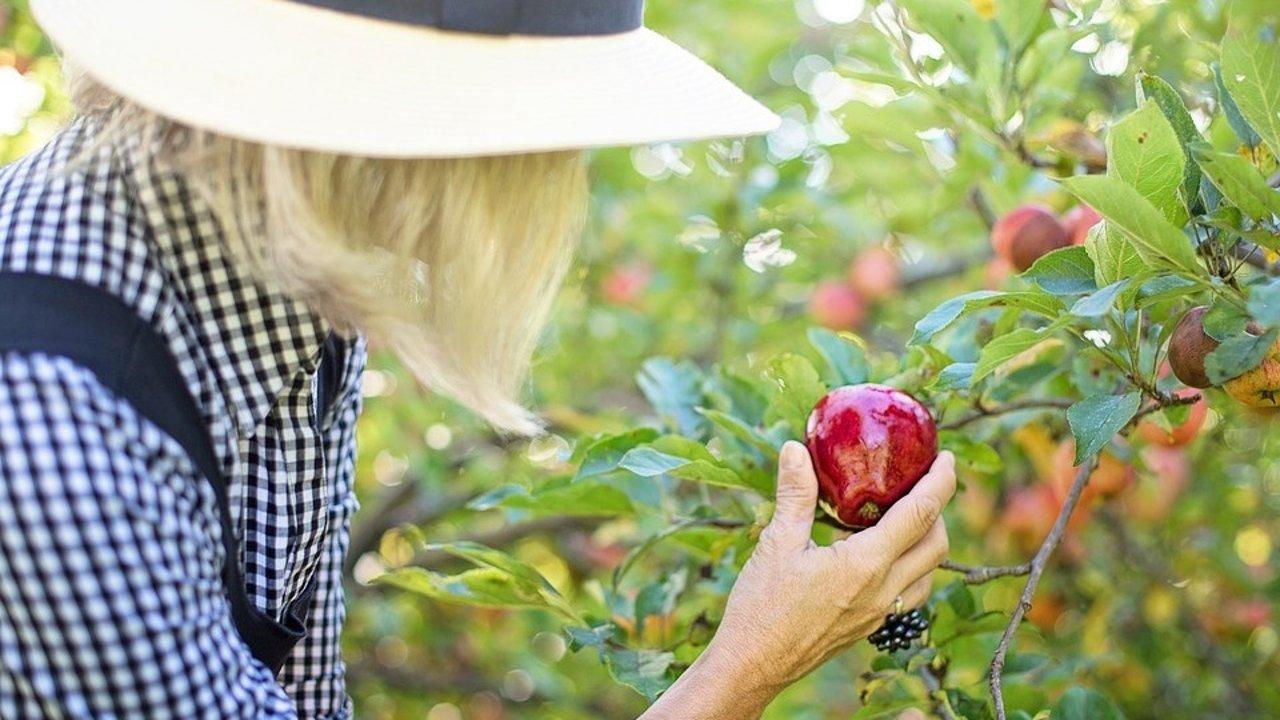 2021费城采摘攻略,大草莓,樱桃,苹果...费城采摘园合集!叫上朋友,带上孩子,享受出游的喜悦吧!