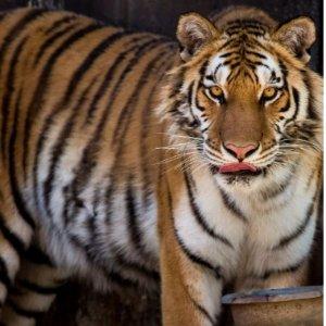 $5.95(原价$7)儿童门票Twin Valley Zoo双子谷动物园开园啦 出去玩好去处
