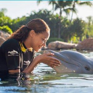 6折起 可以定19-20年全年黑五开抢:奥兰多探索湾Dolphin Swim套餐门票及多园套票黑五大促