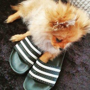 双色可选 $17.86起 码全Adidas 男士条纹款拖鞋热卖 夏日出街必备潮拖