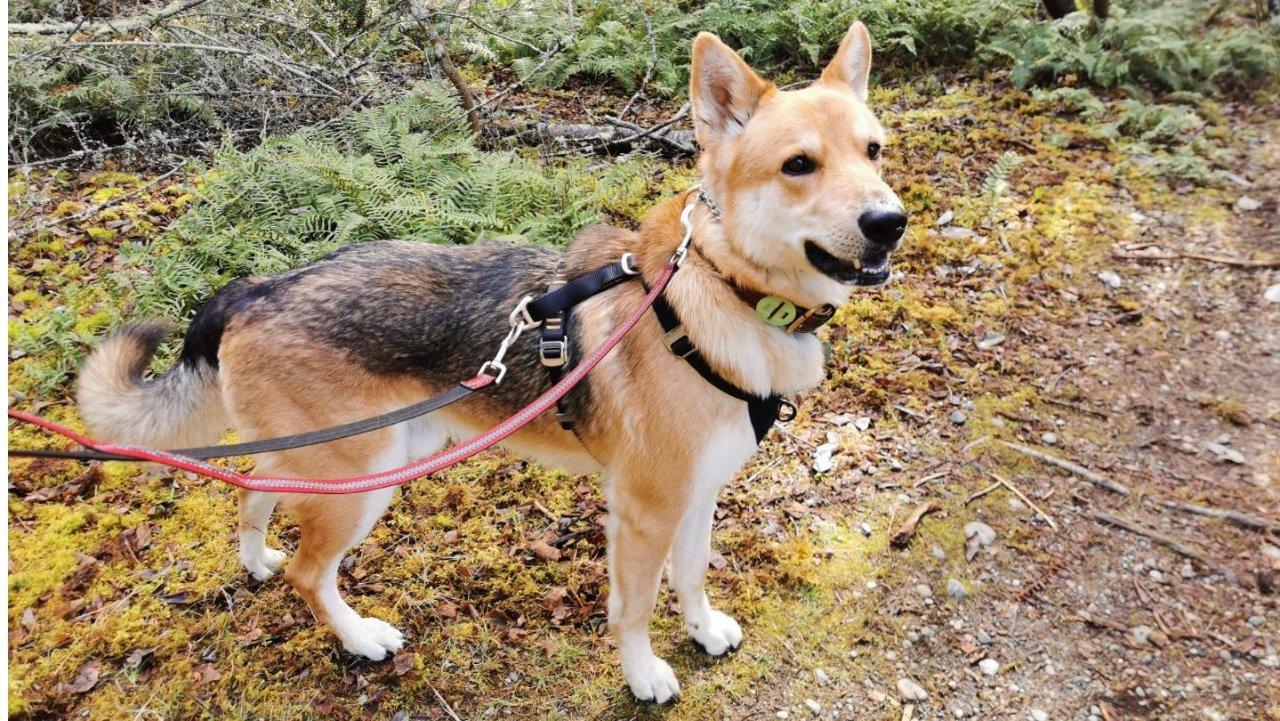 一把辛酸泪之Reactive Dog训练方法+训练工具全测评