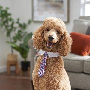 宠物小领带