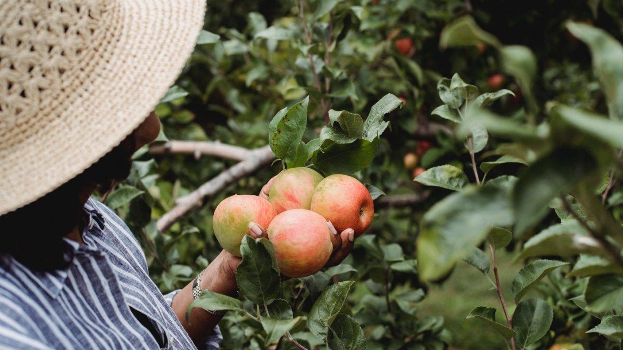 2021美国各地采摘攻略,草莓、樱桃、苹果、桃子...人间四月天,采摘正当时!这份采摘攻略请收好!