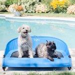 低至5折 + 额外8.5折Petco 精选狗狗夏日降暑用品促销
