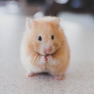 首件5折Chewy 小宠物粮食促销热卖