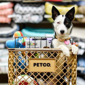 $30 Off $100+Petco Sitewide Savings Event