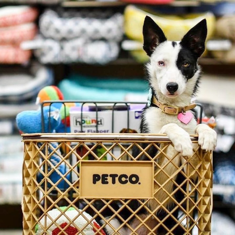 40% OffPetco First Repeat Delivery Order