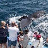 2-2.5小时观鲸之旅 成人票