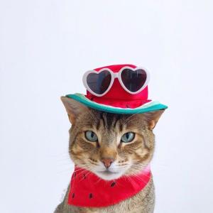 低至5.5折Petco 多款猫咪驱虫药及用品促销
