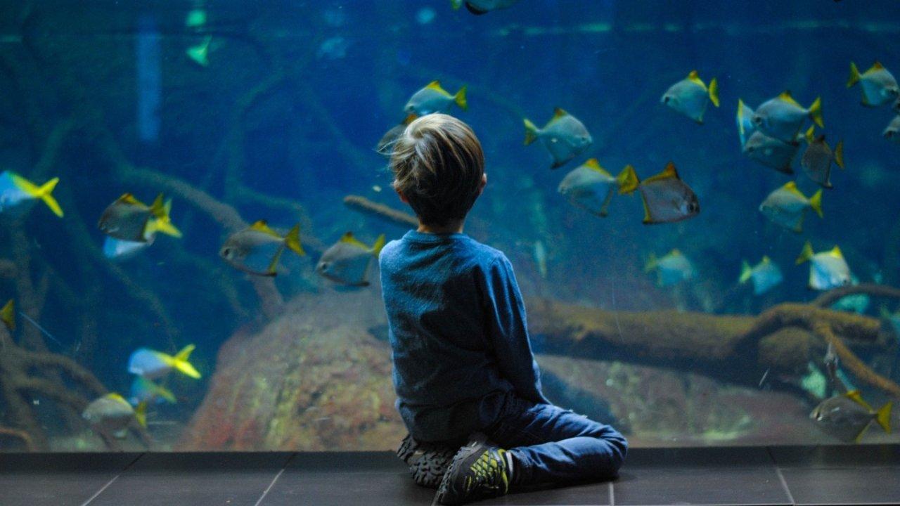 法国超美的水族馆推荐 寓教于乐,带你享受精彩的海底世界!