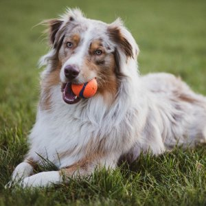 Up to 67% Off Selected Pet Toys on Sale @ Chewy