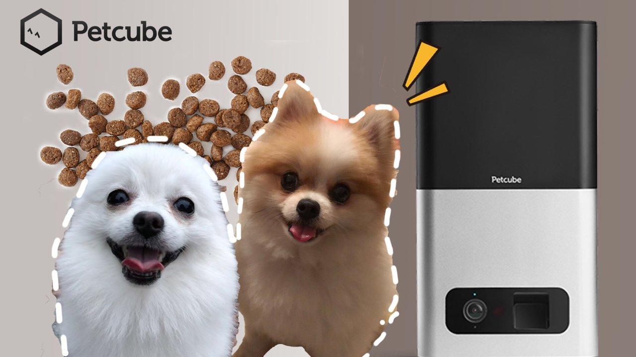 【智能投食监视器】能够远程撒狗粮的养宠必备神器💕|博美原来是小机灵鬼