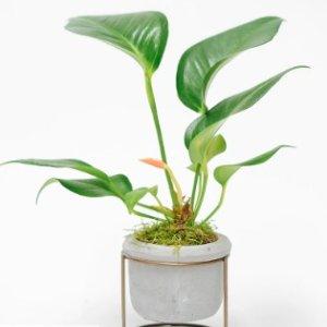 下单次日达 £30起Floom植物盆栽 净化你的房间空气 相伴你的纯粹呼吸