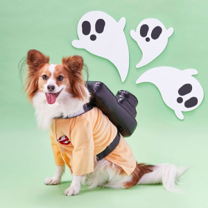 As low as $2Chewy Dog Deals, Renew Daily