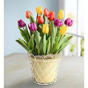 15% OffEaster Plants & Flowers Sale @ 1-800-flowers.com