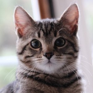 $0.6 多口味猫粮囤起来Friskies 喜跃猫咪罐头 主子喜爱 铲屎官必备
