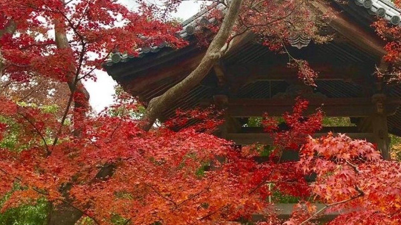 感恩节日本红叶之旅(一)
