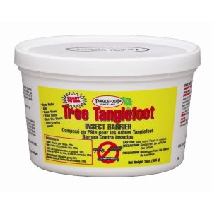 Tanglefoot Tree Insect Barrier 15 oz. Tub Ready-To-Use