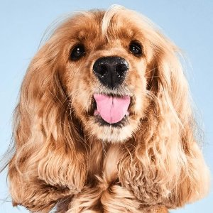 新用户专享折扣薅羊毛:Tail's 狗粮免费送 1个月的口粮白嫖啦