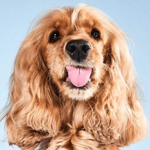 新用户专享折扣薅羊毛:Tail's 狗粮免费送 1个月的口粮有着落啦