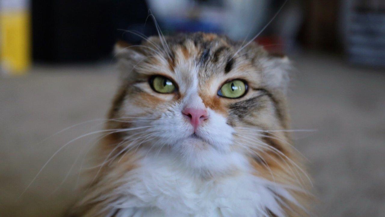 在家处理猫咪轻度黑下巴