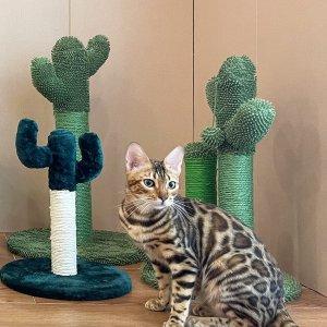 低至6折 €5.99收猫抓板Amazon 猫咪用品专场 猫砂盆、猫玩具、猫粮 铲屎官必备好物