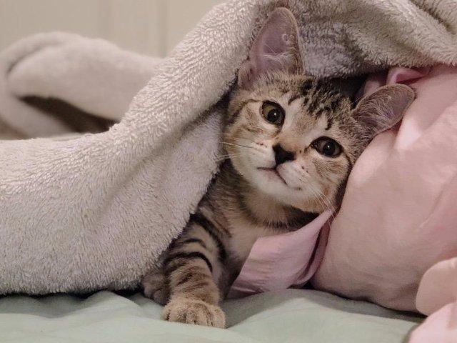 给新手猫爸猫妈的小指南|来自老母亲...