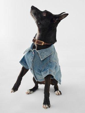 Fido Canine Trucker   Fetch – DL1961
