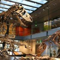 洛杉矶自然历史博物馆单日票