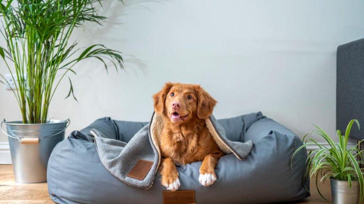 这里有一份加拿大领养/买狗全攻略,快带你的小天使回家吧!