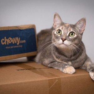As low as $1Chewy Cat Deals, Renew Daily