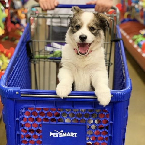 30% OffPetSmart Veterinary Authorized Diets on Sale