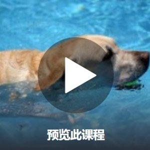 养狗必备爱犬心脏复苏急救课程