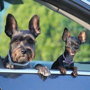 宠物坐飞机这可能是最全的带宠物回国、出国攻略