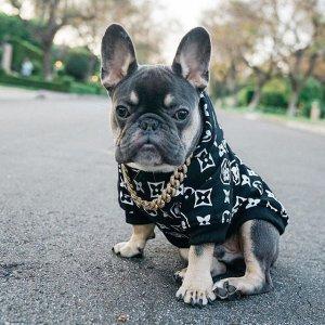 狗狗连帽衫