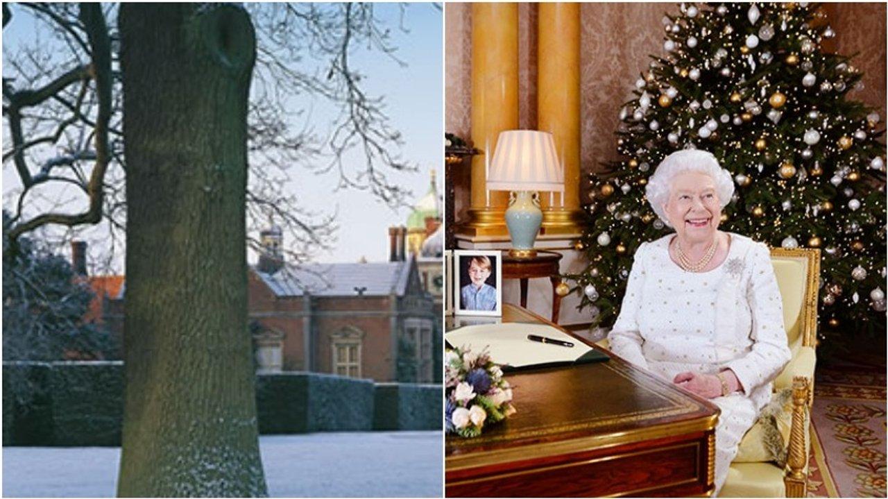 女王也要赚外快?!£20 的皇室牌圣诞树了解一下… | 福尔摩斯· 小郑周报