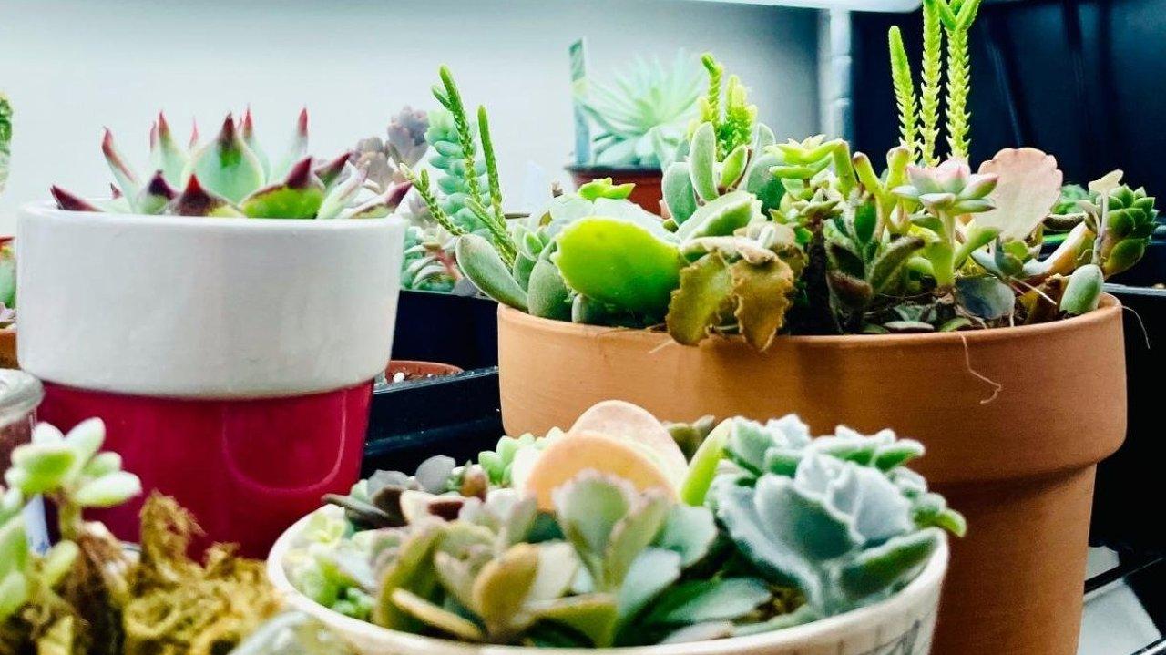 住Apt也可以养超多绿植| 绿植摆放IDEA/TIPS