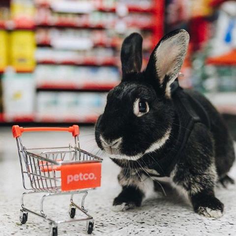 20% Off $60+Petco Buy Online & Pick up In-Store