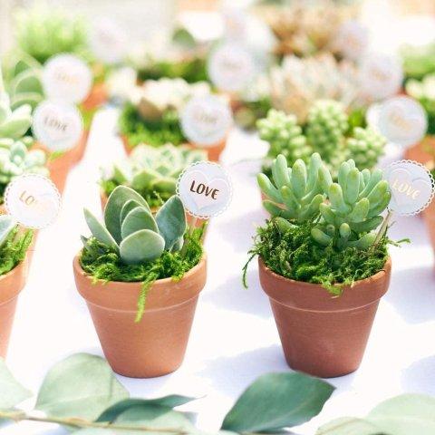 低至7.5折限今天:Shop Succulents 精选室内多肉植物等促销热卖