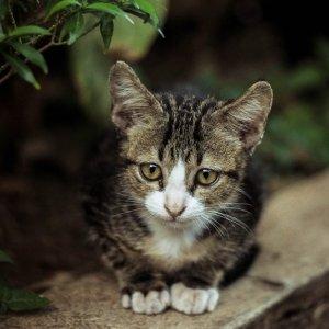 粉丝分享养猫攻略幼猫拉肚子肿么办 猫妈给你支招