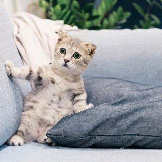 低至4.2折Petco 精选猫咪玩具促销热卖