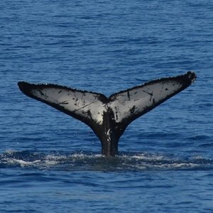 From $29San Diego Whale Watch