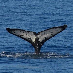 $29起+限时额外8折加州圣地亚哥3小时观鲸游轮之旅