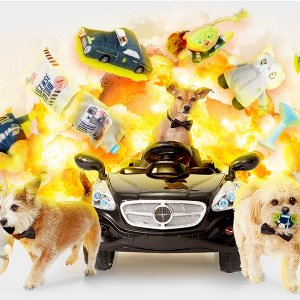 50% off First MonthWith the Purchase of a 6-, 12-Month Subscription @ Barkbox